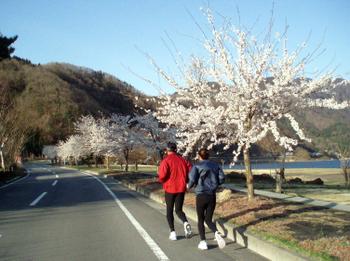 Sakura_run