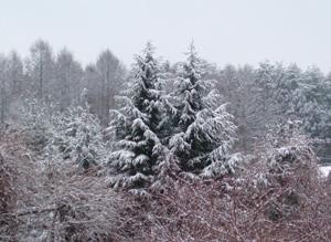 snow21jan2006.jpg