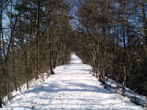 snow trail.jpg
